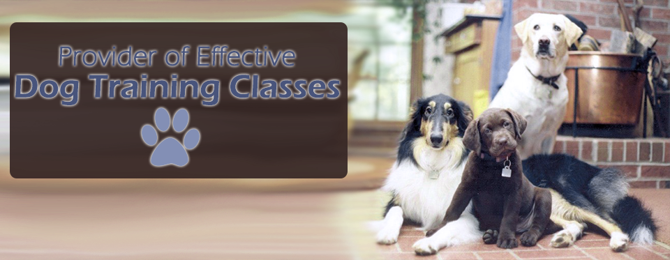 Dog Trainer Obedience Classes Canine Good Citizen Therapy