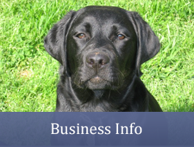 Business Info - Dog Trainer
