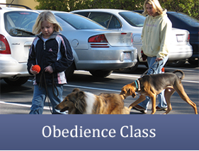 Obedience Class - Dog Trainer